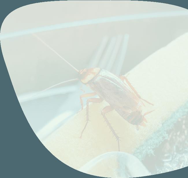 kakkerlak-overlast-bestrijden