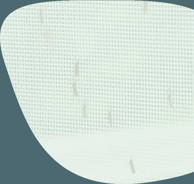 muggen-overlast-bestrijden