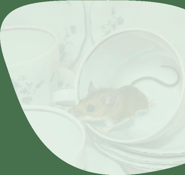 muizen-overlast-bestrijden