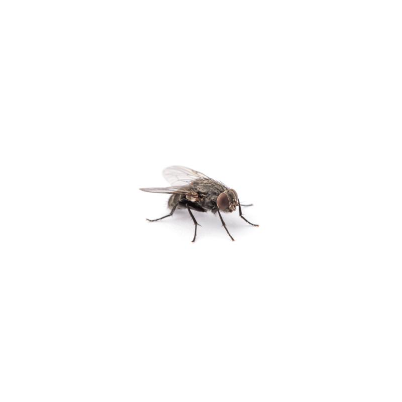 vlieg-plaagdier-ongedierte-bestrijden