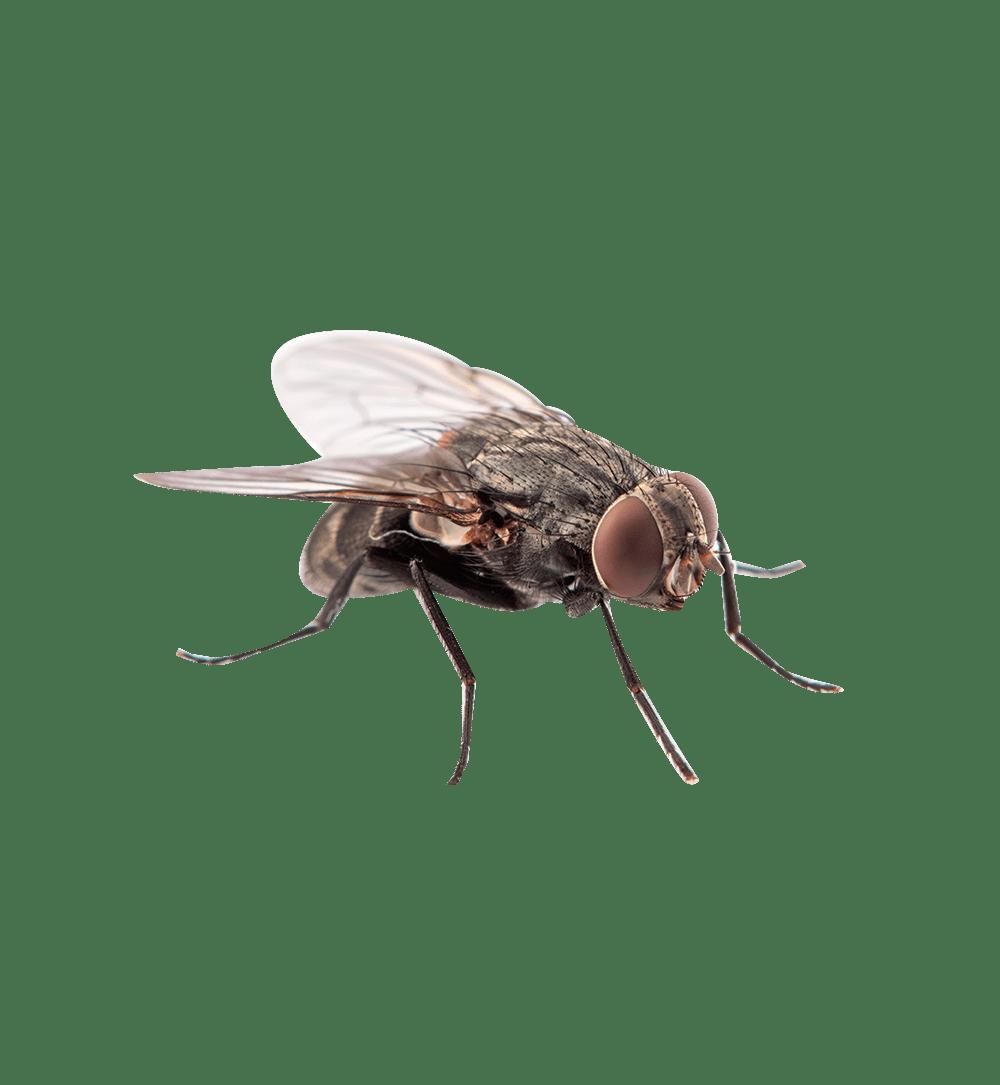 vliegen-overlast-bestrijden-iso